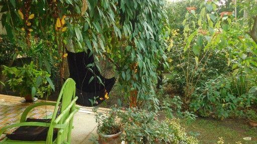 DPB Gardens 1-1(1)