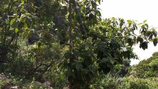 SLT Rich vegetation