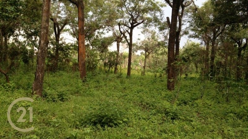 Land for Sale / Perfect for Developing