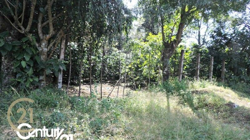 7 Large Lots for sale / Ciudad Vieja