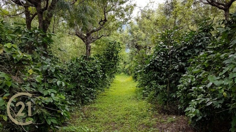 Coffe Farm for Sale in Alotenango